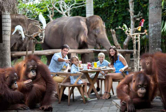 Bali Zoo - Breakfast with Orangutan and Elephant Expedition without Transfer